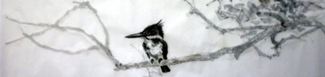 Kingfisher drawing in ink